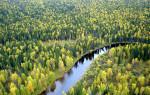 Климатические условия тайги в РФ