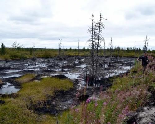 Какие основные экологические проблемы в зоне тундры РФ, пути их решения